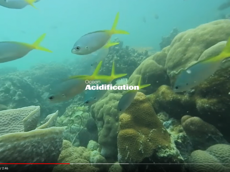 Texas A&M University Palau research ocean acidification